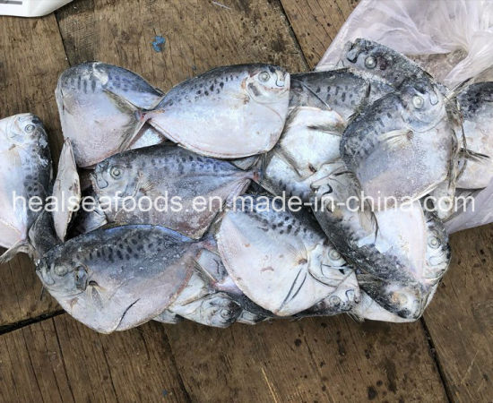 Frozen Whole Round Moon Fish for Sale