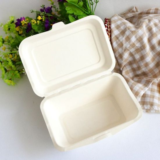 Disposable Biodegradable Sugarcane Bagasse Molded Pulp Paper Food Packaging Container Box