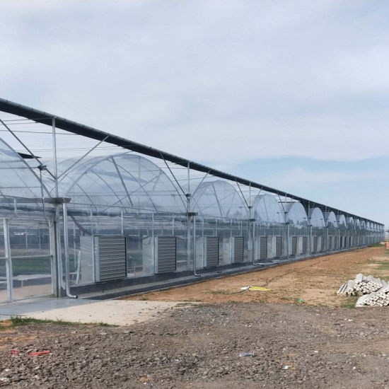 Large - Scale Agricultural Planting Multi - Span Hot - DIP Galvanized Steel Frame Film Greenhouse for Vegetable and Flower Cultivation