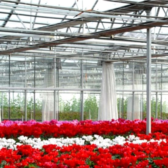 Commercial Multi-Span Glass Greenhouse for Flowers pictures & photos