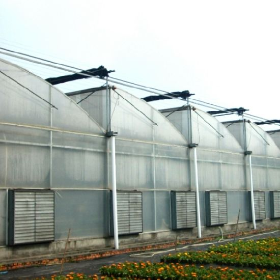 Film Covered Sawtooth Greenhouse for Vegetable pictures & photos