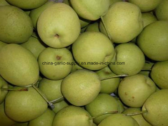 New Crop Fresh Wholesale Shandong Green Yellow Crown Fruit Pear Price pictures & photos