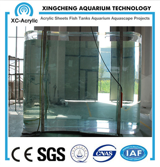 Customize UV Acrylic Fish Tank for Sea Fish Oceanarium