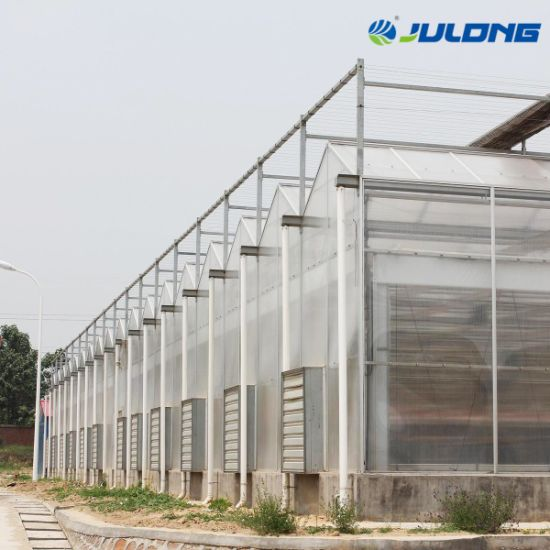Vegetables Multi-Span Glass Greenhouse Hydroponic Growing System