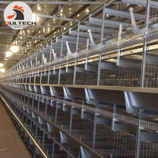 H Type Layer Chicken Cage/Layer Chicken Raising Equipment