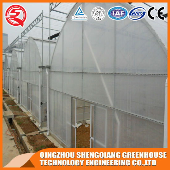 China Agriculture Vegetable/ Flower Plastic Film Greenhouse