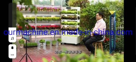 Indoor Greenhouse Vertical Planting Hydroponic Growing Systems