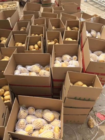 New Crop/Top Quality Good Delicious/Fresh Potato (100-150g) pictures & photos