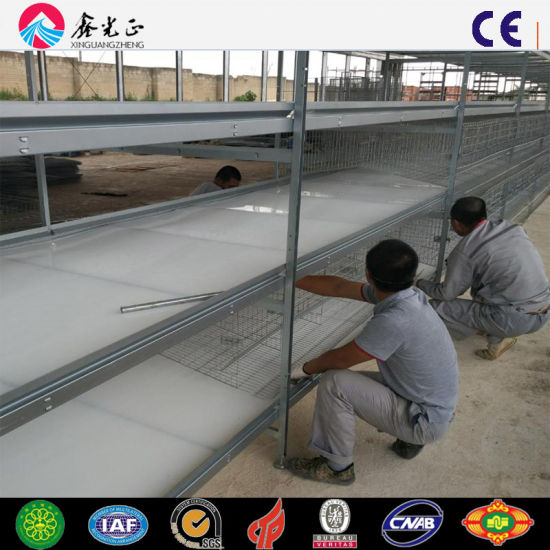 Automatic Feeding Layer Shed Egg Colleting Machine Cage System
