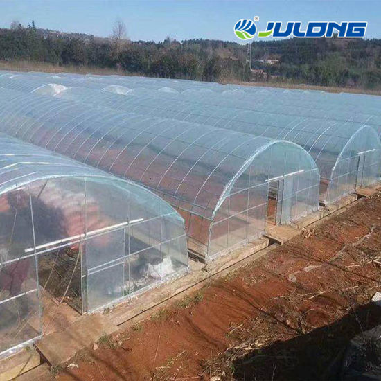 Multi Span Agircultural Tunnel Greenhouse for Strawberry Planting with Cocopeat Substrate Planting