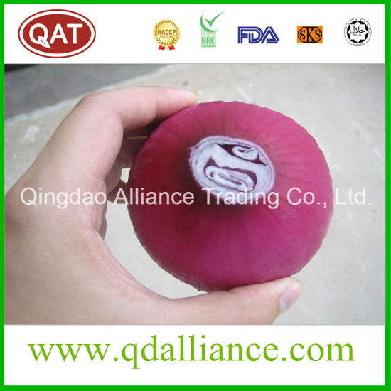 Fresh Peeled Purple White Onion with vacuum Packing