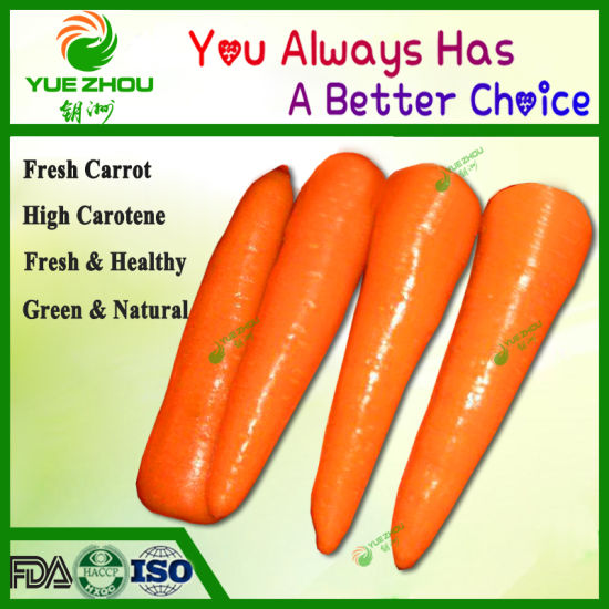 Selling S/M Size Fresh Carrot to Bangladesh with High Quality pictures & photos