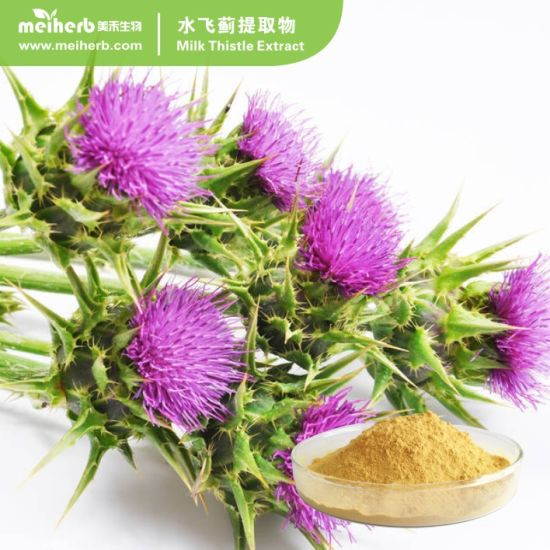 Milk Thistle Extract with 80% Silymarin pictures & photos