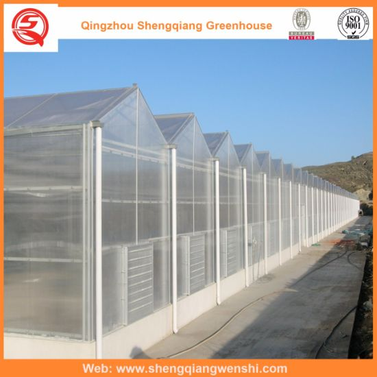 Agriculture Multi Span PC Sheet Green House for Planting pictures & photos