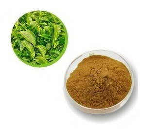 Natural Plant Extract Green Tea Extract Powder pictures & photos