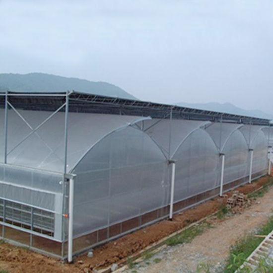 Plastic Film Tunnel Greenhouse for Tomato Planting