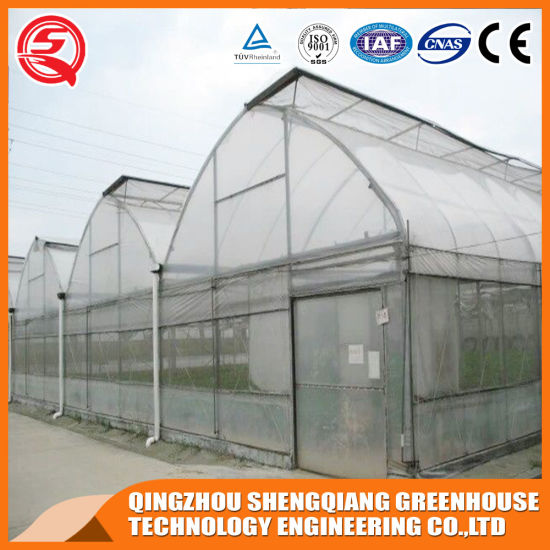 Agriculture Productive Small Plastic Film Garden Greenhouse with Hydroponics Equipment/System