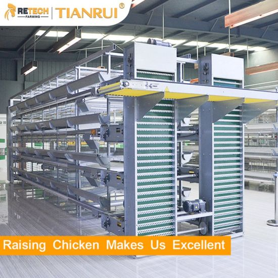 Automatic H Type Poultry Cage Layer Chicken Battery Cages