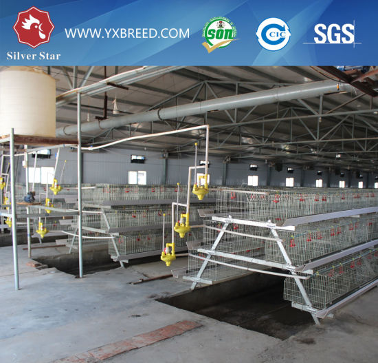 Sourth American Broiler and Layer Chicken Cages with Best Price