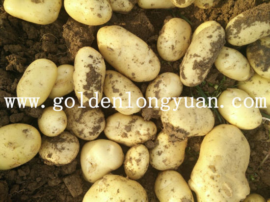 Fresh Potato Wholesale Price for Selling pictures & photos