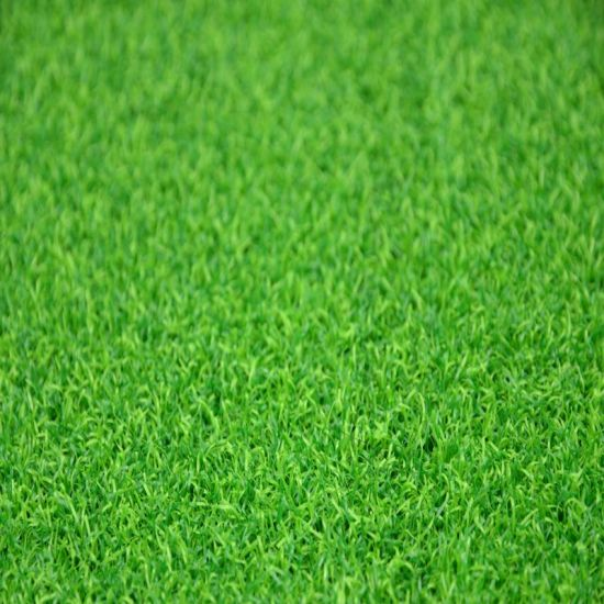 Gfn Artificial Grass for Putting Green pictures & photos