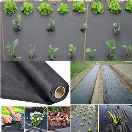Agriculture Non Woven Polypropylene Fabric pictures & photos