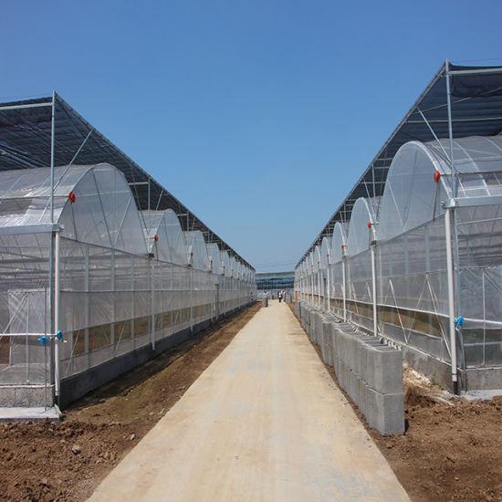 Plastic Film Greenhouse Hydroponics System for Vegetables/Flowers/Fruit