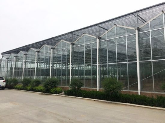 Commercial Multi-Span Garden Glass Green House