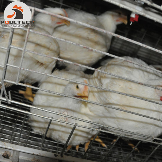 Broiler Farm Equipment Chicken Cage/ Broiler Cage System