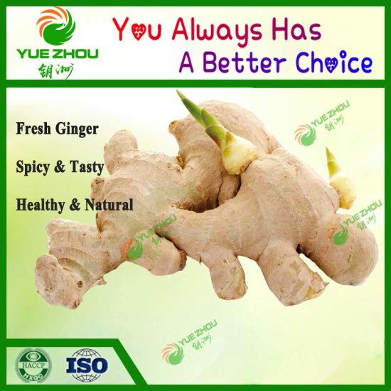 Top Sale 2019 New Corp Fresh Ginger to Pakistan