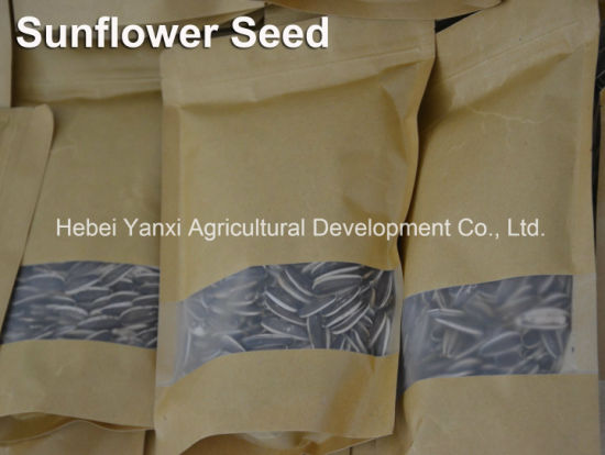 High-Quality Hot Sale Dried Hot Sale Spiced Chinese Sunflower Seeds pictures & photos