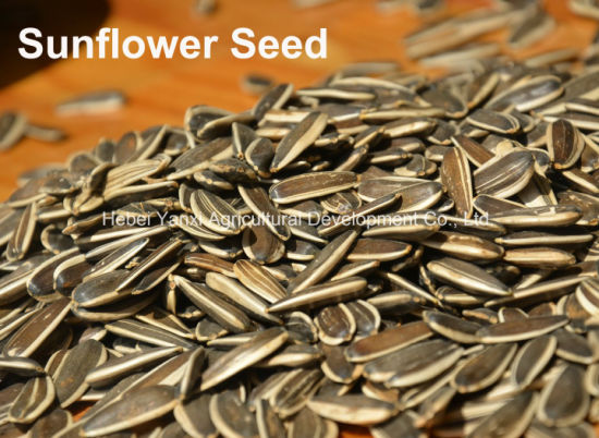 Quality Sunflower Seeds Scrambled Flavorful Sunflower Seeds pictures & photos