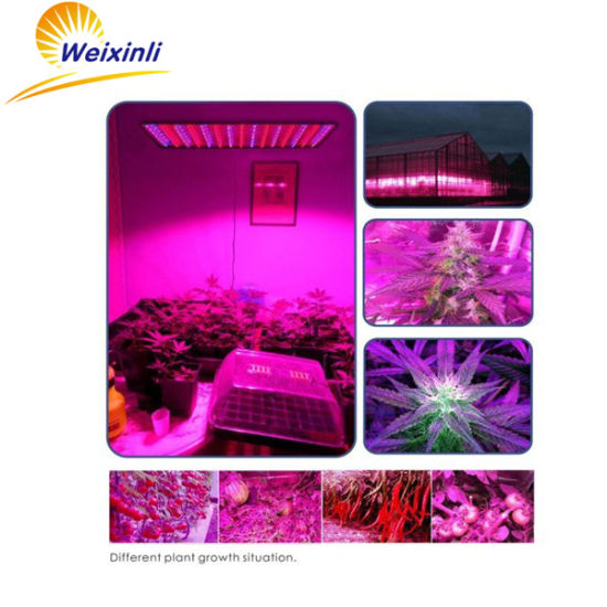45W LED Grow Light 225 Lamp Light for Vegetables Lettuce pictures & photos