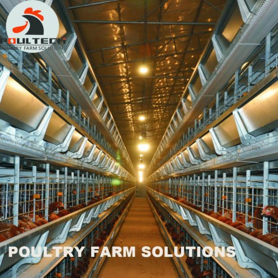 H Frame Layer Chicken Cage for Big Scale Poultry Farm