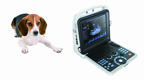 Veterinary Color Doppler Ultrasound Scanner (K6 Vet) pictures & photos
