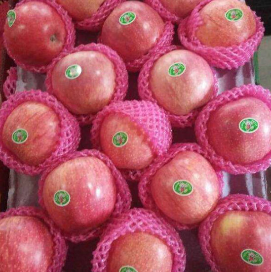 Professional Supplier of Chinese Fresh Qinguan Apple pictures & photos