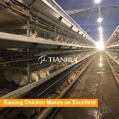 Automatic Layer Chicken Battery Cages Laying Hens