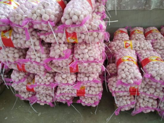 Export New Crop Pure White Chinese White Garlic pictures & photos