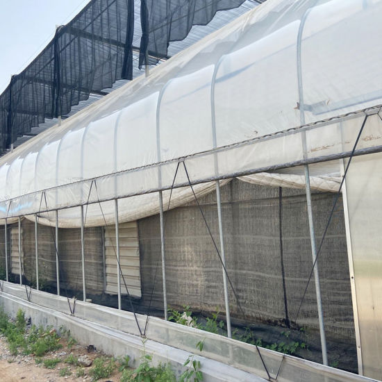 Single Film Greenhouse with Irrigation Systems
