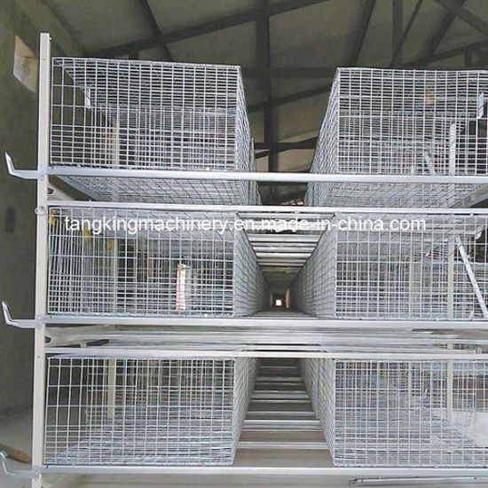 China 3 Layer Egg Chicken Cage/Poultry Farm House Design