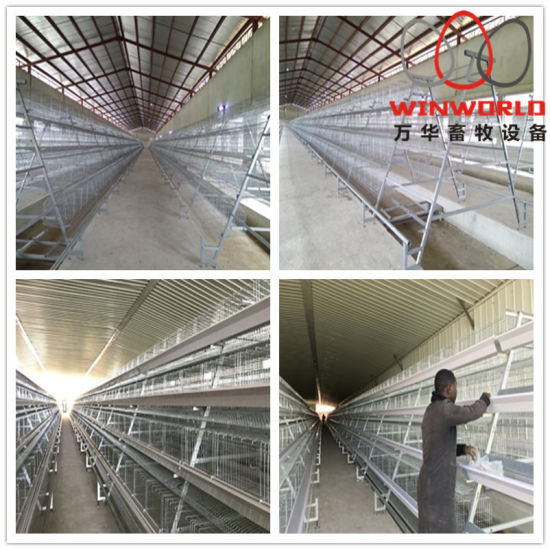 Popular Automatic Egg Layer Chicken Farm Laying Hens Poultry Battery Cages  for Sale