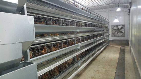 Laying Hens Chicken Cages with Environment Control Feeding Equipment pictures & photos