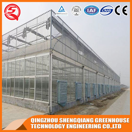 Agriculture Productive Stainless Steel PC Sheet Greenhouse Vertical Farming Companies