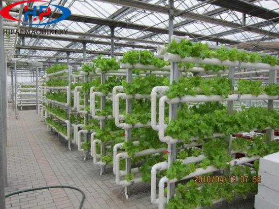 China Greenhouse Vertical Hydroponic Growing Systems For