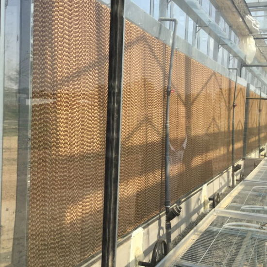 China Supplier Multi-Span Glass Greenhouse for Hot Sale pictures & photos
