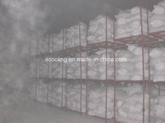 China Customized Large Scale Freeze Drying Cold Storage and