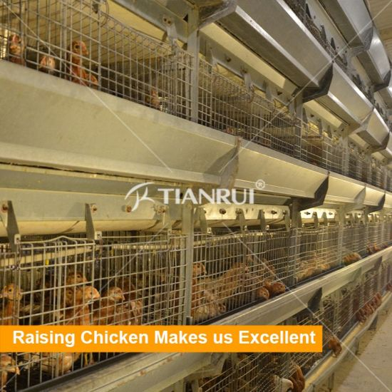 Poultry Farm Equipments Pullet Chicken Cage System of Day Old Chicks