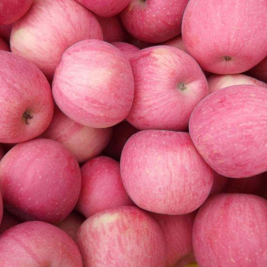 New Crop Super Quality Fresh Qinguan Apple