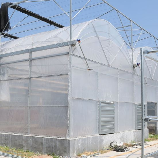 Agri Film House with Hydroponic System