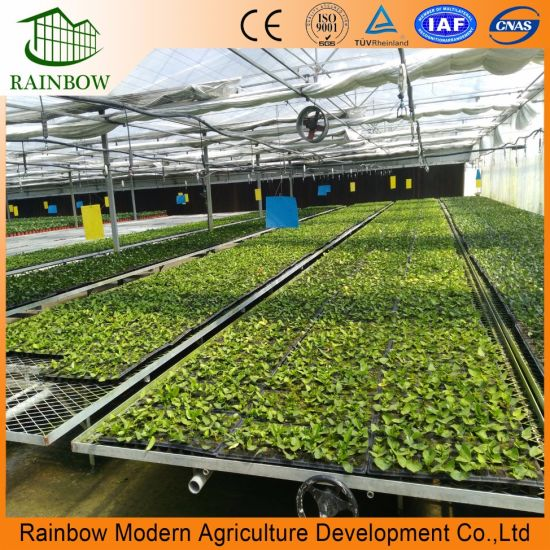 China Good Quality Tempered PVC/PE Film Greenhouse for